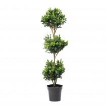 Planta de Manjericão 452749 h132cm 780fls